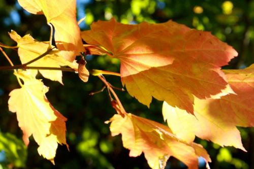 Autumn-leaves 2